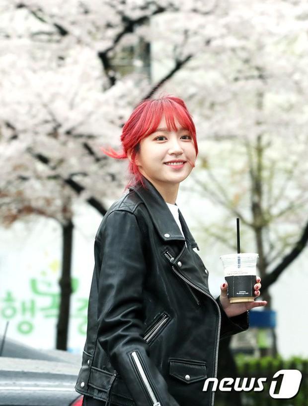 Tiên cảnh hoa anh đào tại Hàn: Mỹ nhân Hani chiếm hết spotlight, Wanna One xuất hiện cùng quân đoàn mỹ nam - Ảnh 2.