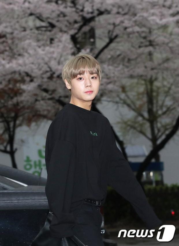 Tiên cảnh hoa anh đào tại Hàn: Mỹ nhân Hani chiếm hết spotlight, Wanna One xuất hiện cùng quân đoàn mỹ nam - Ảnh 16.