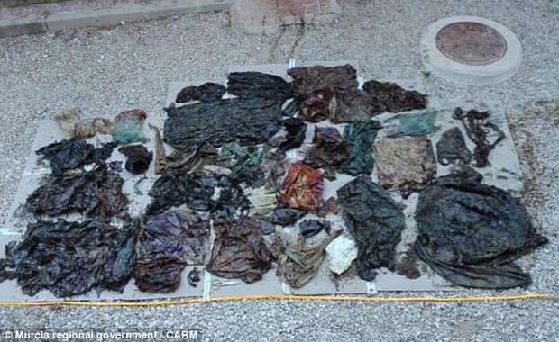 Cá nhà táng chết dạt vào bờ biển, các nhà môi trường lo ngại khi phát hiện 29 kg rác thải trong bụng con vật xấu số - Ảnh 2.