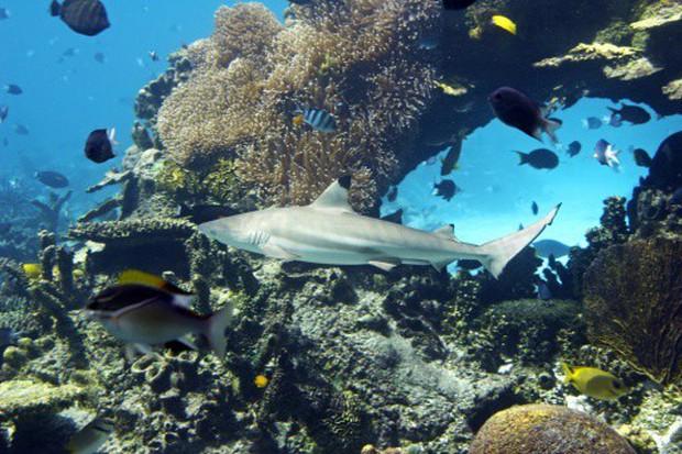 Hỏi khó: Từ lâu chúng ta đã lặn biển cùng cá mập, nhưng với... cá sấu thì sao? - Ảnh 6.