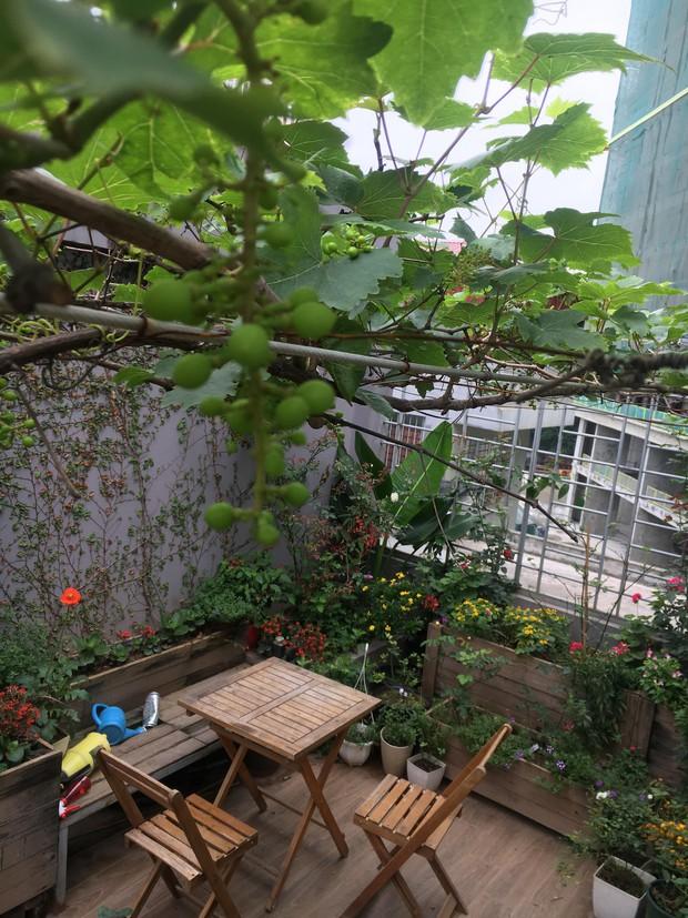 Khu vườn sân thượng trồng cho vui mà cây nào cũng thắm hoa trĩu quả của bà mẹ 8x mát tay - Ảnh 2.