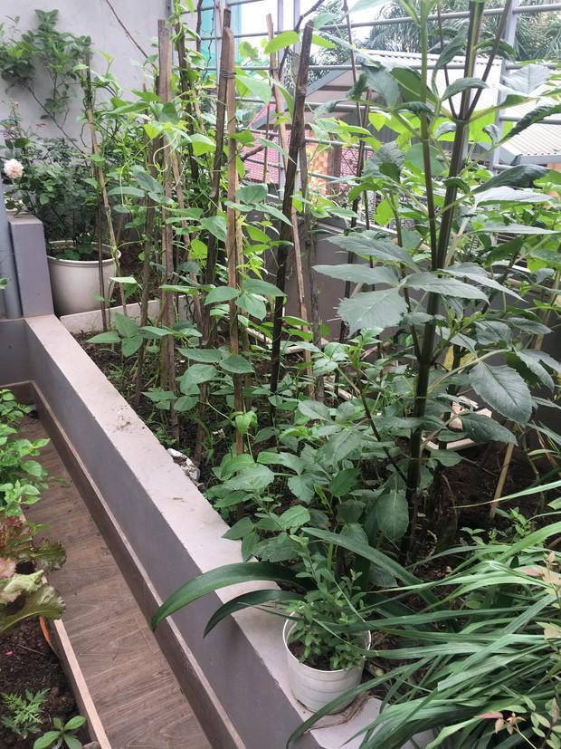 Khu vườn sân thượng trồng cho vui mà cây nào cũng thắm hoa trĩu quả của bà mẹ 8x mát tay - Ảnh 6.