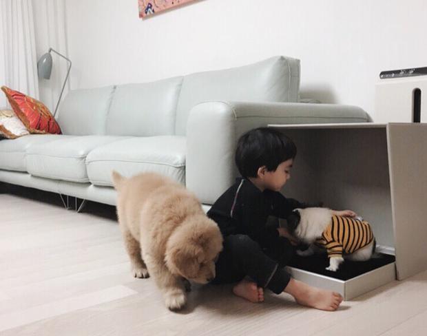Tình bạn đẹp như mơ, đôi lúc giận hờn vu vơ của nhóc tì Hàn Quốc với chú chó cưng đốn tim dân mạng - Ảnh 7.