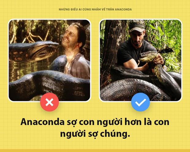 Chào các ông! Tôi là trăn Anaconda và đây toàn là những sự thật các ông vẫn đang hiểu lầm về tôi - Ảnh 3.
