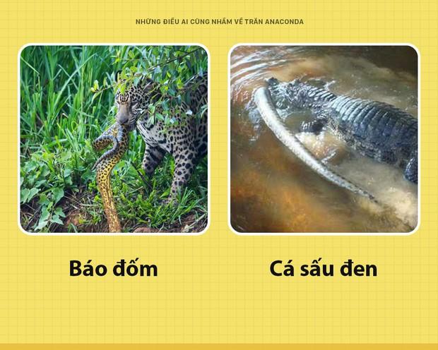 Chào các ông! Tôi là trăn Anaconda và đây toàn là những sự thật các ông vẫn đang hiểu lầm về tôi - Ảnh 1.