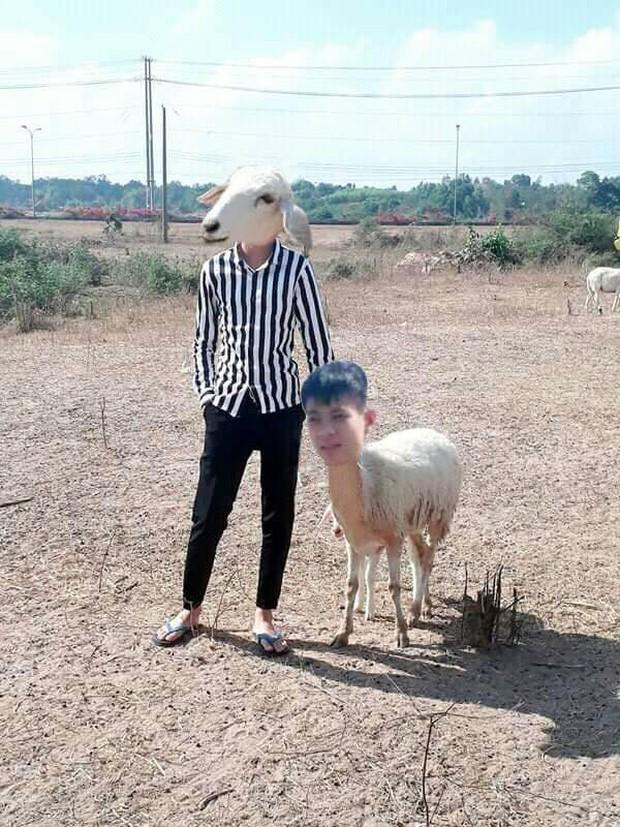 Thanh niên tạo dáng bên chú cừu đầy thần thái nhưng vẫn nhờ cư dân mạng sửa ảnh và cái kết buồn - Ảnh 2.