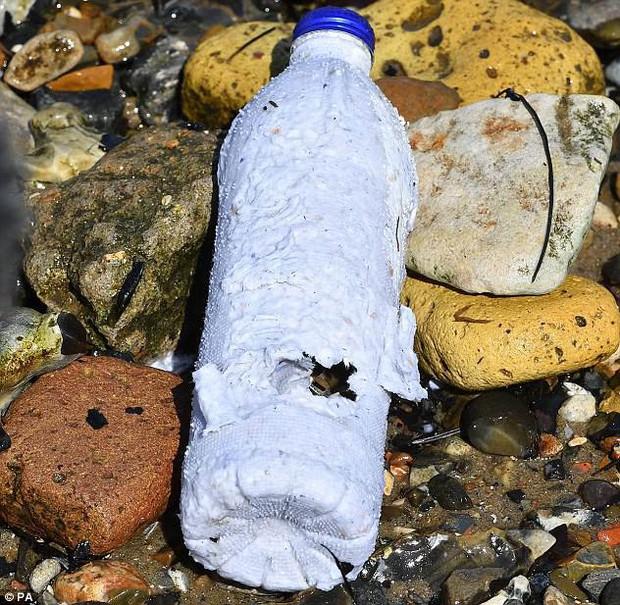 Chai nước cứu cả thế giới: tan trong nước biển sau 3 tuần, cá ăn vào cũng chẳng làm sao - Ảnh 1.