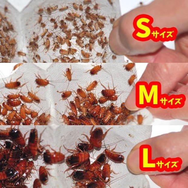 MXH Việt phát sốt với hình ảnh gián đóng hộp được bán tại siêu thị Nhật Bản - Ảnh 2.