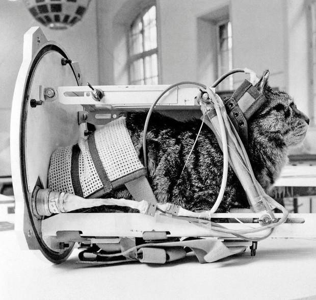 Số phận bi thảm của cô mèo đầu tiên sống sót sau khi trở về từ vũ trụ - Ảnh 3.