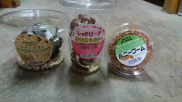 MXH Việt phát sốt với hình ảnh gián đóng hộp được bán tại siêu thị Nhật Bản - Ảnh 1.