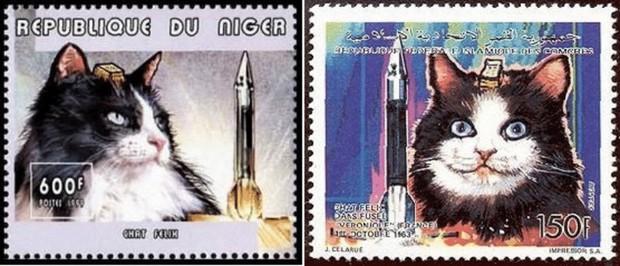Số phận bi thảm của cô mèo đầu tiên sống sót sau khi trở về từ vũ trụ - Ảnh 4.