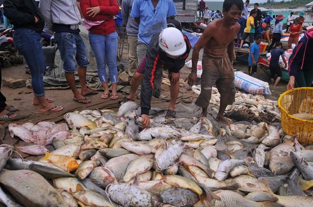 Điều tra nguyên nhân hơn 1,5 ngàn tấn cá bè bị chết đồng loạt - Ảnh 1.