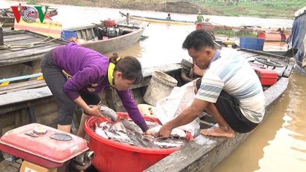 Hàng trăm tấn cá bè trên sông La Ngà chết trong đêm - Ảnh 1.