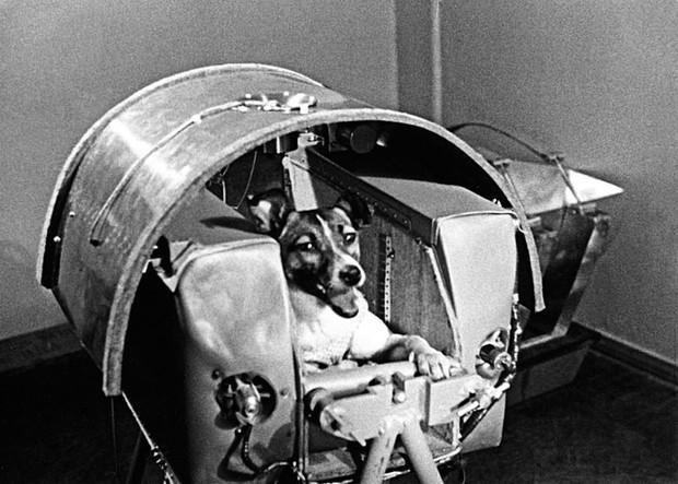 Số phận bi thảm của cô mèo đầu tiên sống sót sau khi trở về từ vũ trụ - Ảnh 5.