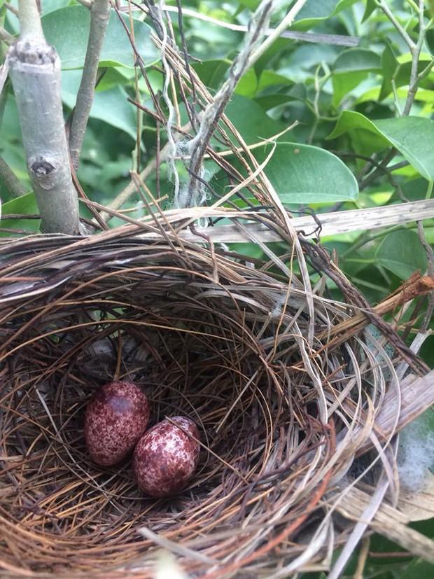 Thấy trong sân nhà có tổ chim, người phụ nữ kiên nhẫn chụp ảnh từ lúc là quả trứng cho tới khi thành bầy chim non xinh xinh - Ảnh 1.
