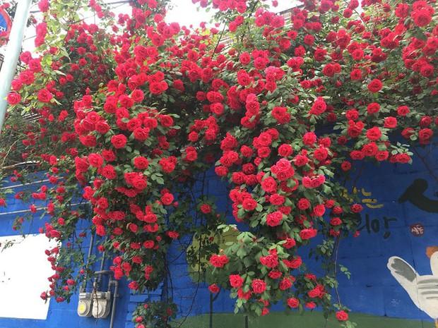 Căn nhà với cánh cổng hoa hồng đang được cư dân mạng chia sẻ mạnh vì lãng mạn không chịu nổi - Ảnh 1.