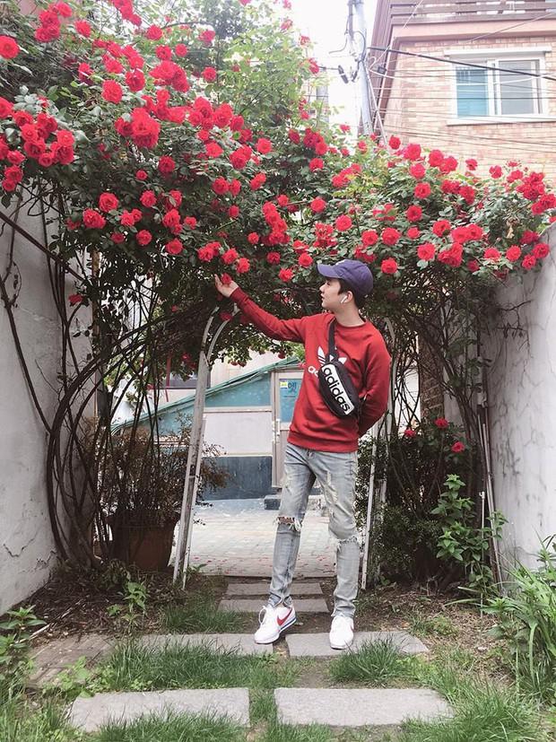 Căn nhà với cánh cổng hoa hồng đang được cư dân mạng chia sẻ mạnh vì lãng mạn không chịu nổi - Ảnh 2.