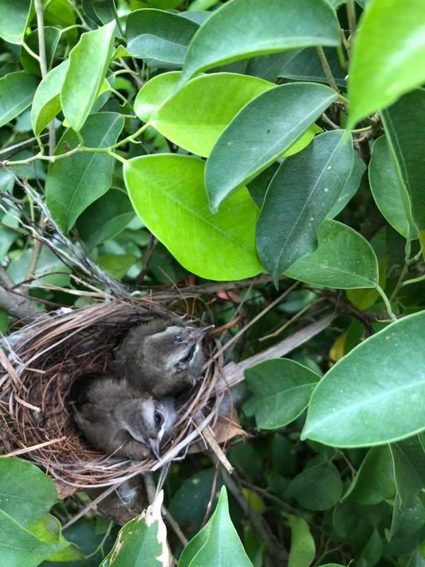 Thấy trong sân nhà có tổ chim, người phụ nữ kiên nhẫn chụp ảnh từ lúc là quả trứng cho tới khi thành bầy chim non xinh xinh - Ảnh 6.
