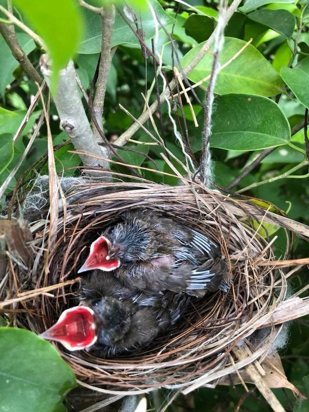 Thấy trong sân nhà có tổ chim, người phụ nữ kiên nhẫn chụp ảnh từ lúc là quả trứng cho tới khi thành bầy chim non xinh xinh - Ảnh 5.
