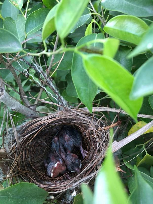 Thấy trong sân nhà có tổ chim, người phụ nữ kiên nhẫn chụp ảnh từ lúc là quả trứng cho tới khi thành bầy chim non xinh xinh - Ảnh 2.