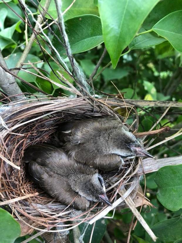 Thấy trong sân nhà có tổ chim, người phụ nữ kiên nhẫn chụp ảnh từ lúc là quả trứng cho tới khi thành bầy chim non xinh xinh - Ảnh 7.