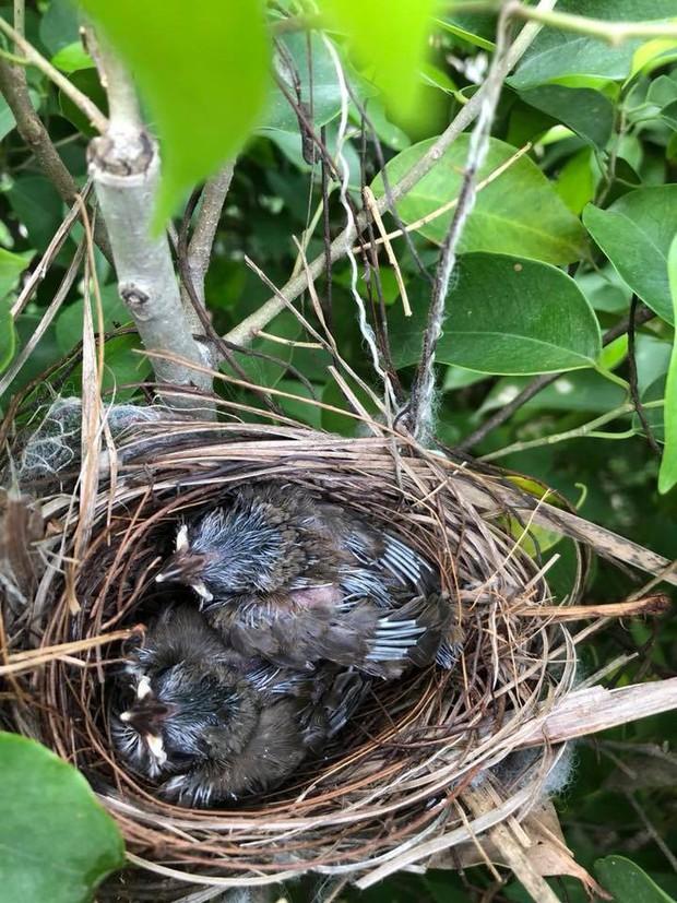 Thấy trong sân nhà có tổ chim, người phụ nữ kiên nhẫn chụp ảnh từ lúc là quả trứng cho tới khi thành bầy chim non xinh xinh - Ảnh 4.