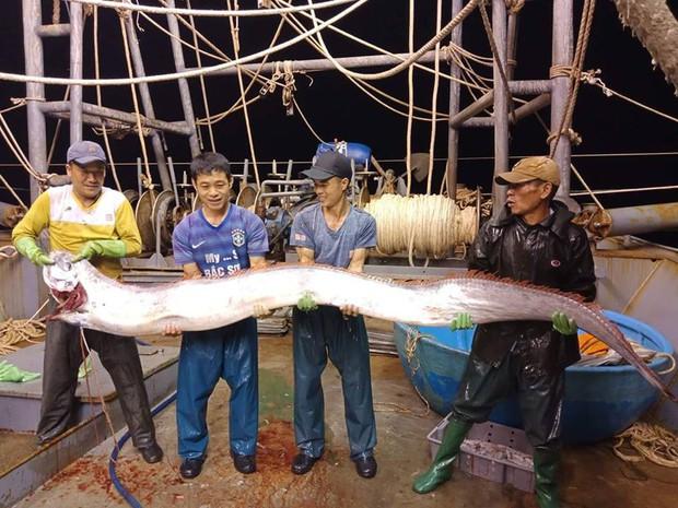 Thanh Hoá: Ngư dân bắt được cá hố khổng lồ nặng gần 1 tạ, 4 người mới nhấc lên nổi - Ảnh 2.