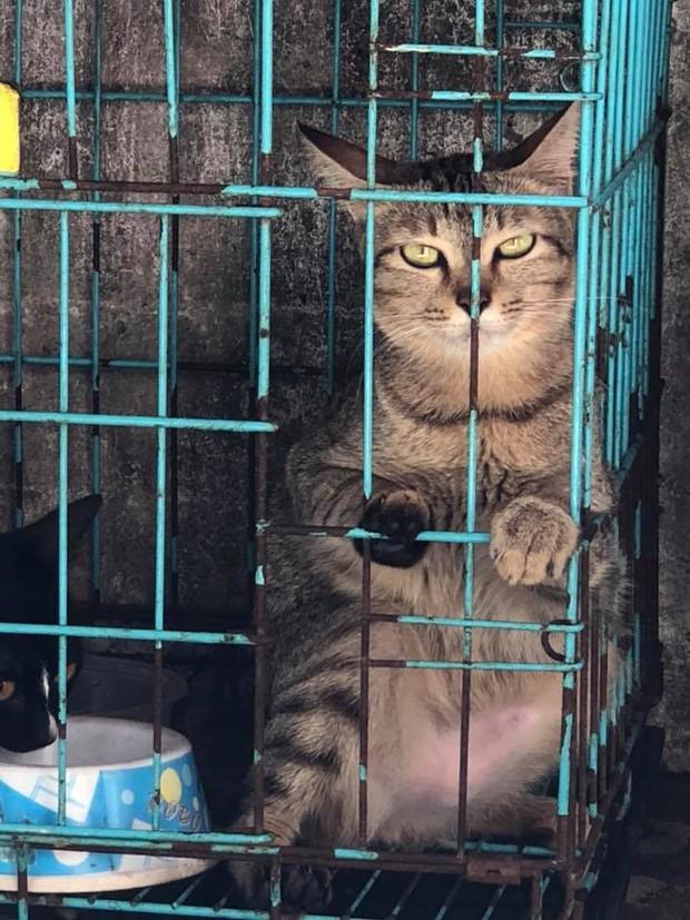 Chùm ảnh: Những con boss dị không thích ngồi theo kiểu truyền thống của loài mèo - Ảnh 8.