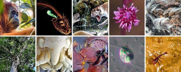 10 sinh vật kỳ lạ và độc đáo nhất mà các nhà khoa học đã phát hiện ra trong năm 2018 - Ảnh 1.