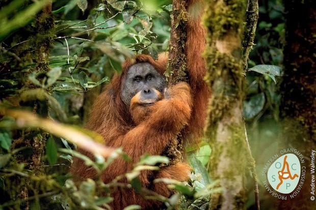 10 sinh vật kỳ lạ và độc đáo nhất mà các nhà khoa học đã phát hiện ra trong năm 2018 - Ảnh 6.