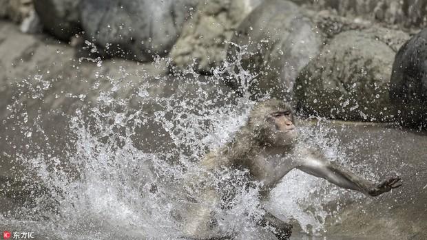 Hai chú khỉ đánh nhau tóe lửa giữa công viên Nhật Bản để tranh chức Mỹ Hầu Vương - Ảnh 6.