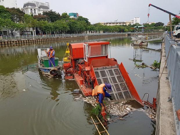 Cá lại chết hàng loạt trên kênh Nhiêu Lộc - Thị Nghè ở Sài Gòn - Ảnh 4.