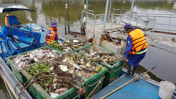 Cá lại chết hàng loạt trên kênh Nhiêu Lộc - Thị Nghè ở Sài Gòn - Ảnh 2.