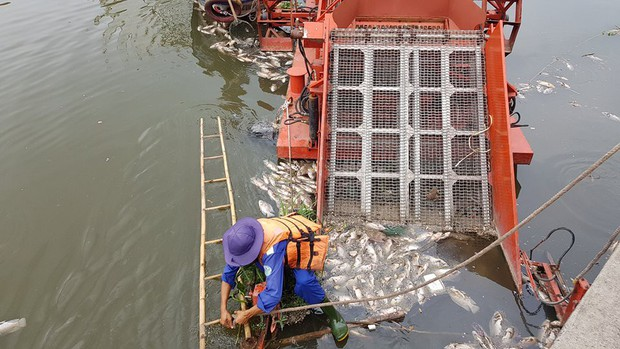 Cá lại chết hàng loạt trên kênh Nhiêu Lộc - Thị Nghè ở Sài Gòn - Ảnh 1.