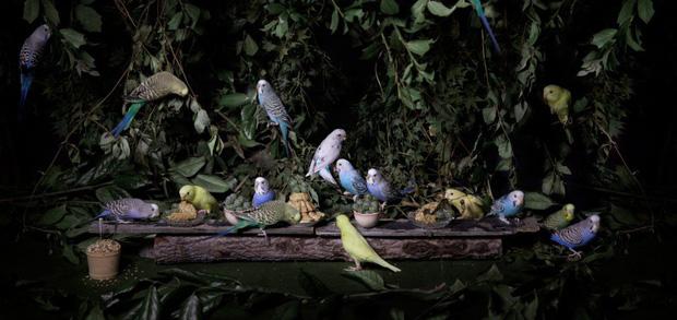 Khi muông thú mở tiệc linh đình: rắn thập thò, con lười đu bám dưới gầm bàn và giấc mơ thời bé của nữ nhiếp ảnh gia - Ảnh 2.