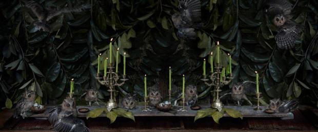 Khi muông thú mở tiệc linh đình: rắn thập thò, con lười đu bám dưới gầm bàn và giấc mơ thời bé của nữ nhiếp ảnh gia - Ảnh 15.