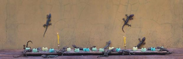 Khi muông thú mở tiệc linh đình: rắn thập thò, con lười đu bám dưới gầm bàn và giấc mơ thời bé của nữ nhiếp ảnh gia - Ảnh 20.