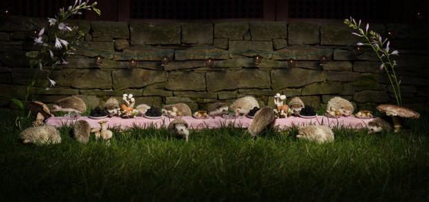 Khi muông thú mở tiệc linh đình: rắn thập thò, con lười đu bám dưới gầm bàn và giấc mơ thời bé của nữ nhiếp ảnh gia - Ảnh 4.