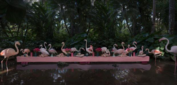Khi muông thú mở tiệc linh đình: rắn thập thò, con lười đu bám dưới gầm bàn và giấc mơ thời bé của nữ nhiếp ảnh gia - Ảnh 8.