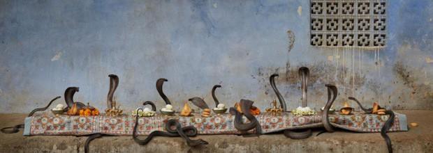 Khi muông thú mở tiệc linh đình: rắn thập thò, con lười đu bám dưới gầm bàn và giấc mơ thời bé của nữ nhiếp ảnh gia - Ảnh 9.