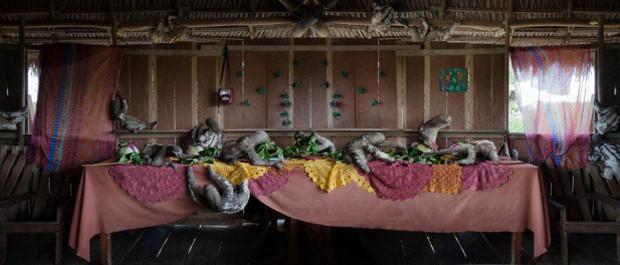 Khi muông thú mở tiệc linh đình: rắn thập thò, con lười đu bám dưới gầm bàn và giấc mơ thời bé của nữ nhiếp ảnh gia - Ảnh 10.