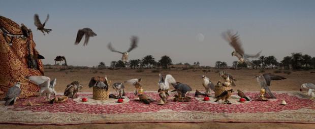 Khi muông thú mở tiệc linh đình: rắn thập thò, con lười đu bám dưới gầm bàn và giấc mơ thời bé của nữ nhiếp ảnh gia - Ảnh 11.
