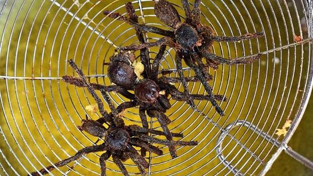 Rết rán Thanh Đảo, mọt cọ Châu Phi hay nhện chiên Campuchia - những món ăn nhìn thì phát sợ nhưng vẫn thành đặc sản của nhiều địa phương - Ảnh 5.