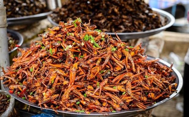 Rết rán Thanh Đảo, mọt cọ Châu Phi hay nhện chiên Campuchia - những món ăn nhìn thì phát sợ nhưng vẫn thành đặc sản của nhiều địa phương - Ảnh 9.