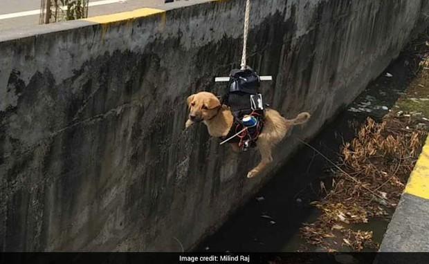 Thấy cún con 2 ngày chờ chết dưới cống bẩn, kỹ sư Ấn Độ chế luôn robot gắp thú để giải cứu - Ảnh 3.
