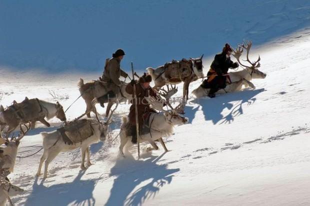 Cuộc sống của tộc người nuôi tuần lộc ở Mông Cổ - Ảnh 2.