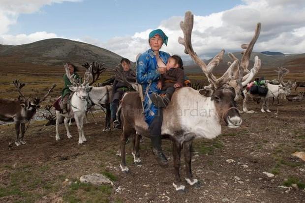 Cuộc sống của tộc người nuôi tuần lộc ở Mông Cổ - Ảnh 4.