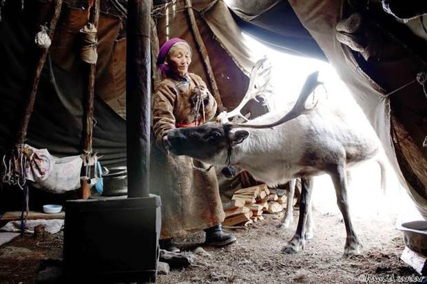 Cuộc sống của tộc người nuôi tuần lộc ở Mông Cổ - Ảnh 7.