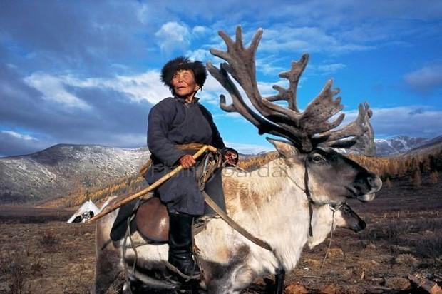 Cuộc sống của tộc người nuôi tuần lộc ở Mông Cổ - Ảnh 8.