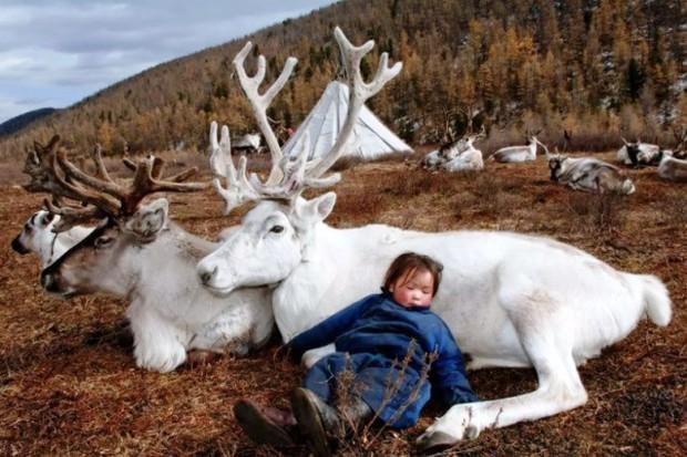 Cuộc sống của tộc người nuôi tuần lộc ở Mông Cổ - Ảnh 9.